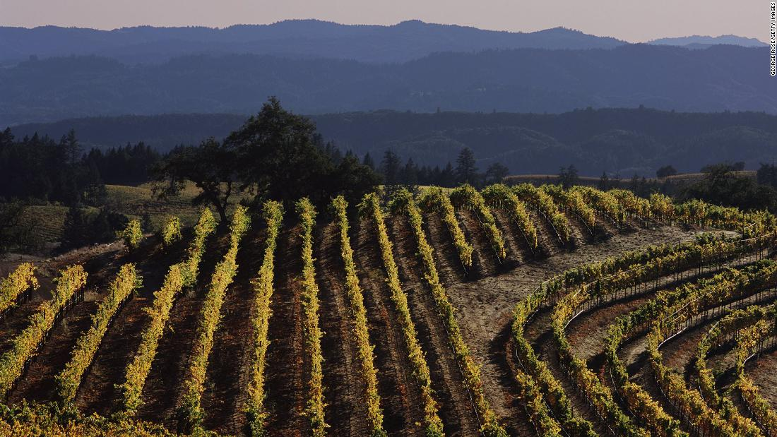Murphy-Goode Winery will pay you $10,000 a month to live and work in Sonoma