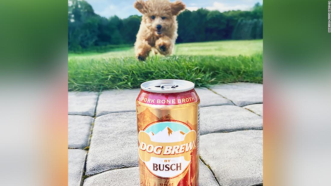 Busch will pay your pup $20,000 to be official dog beer taster