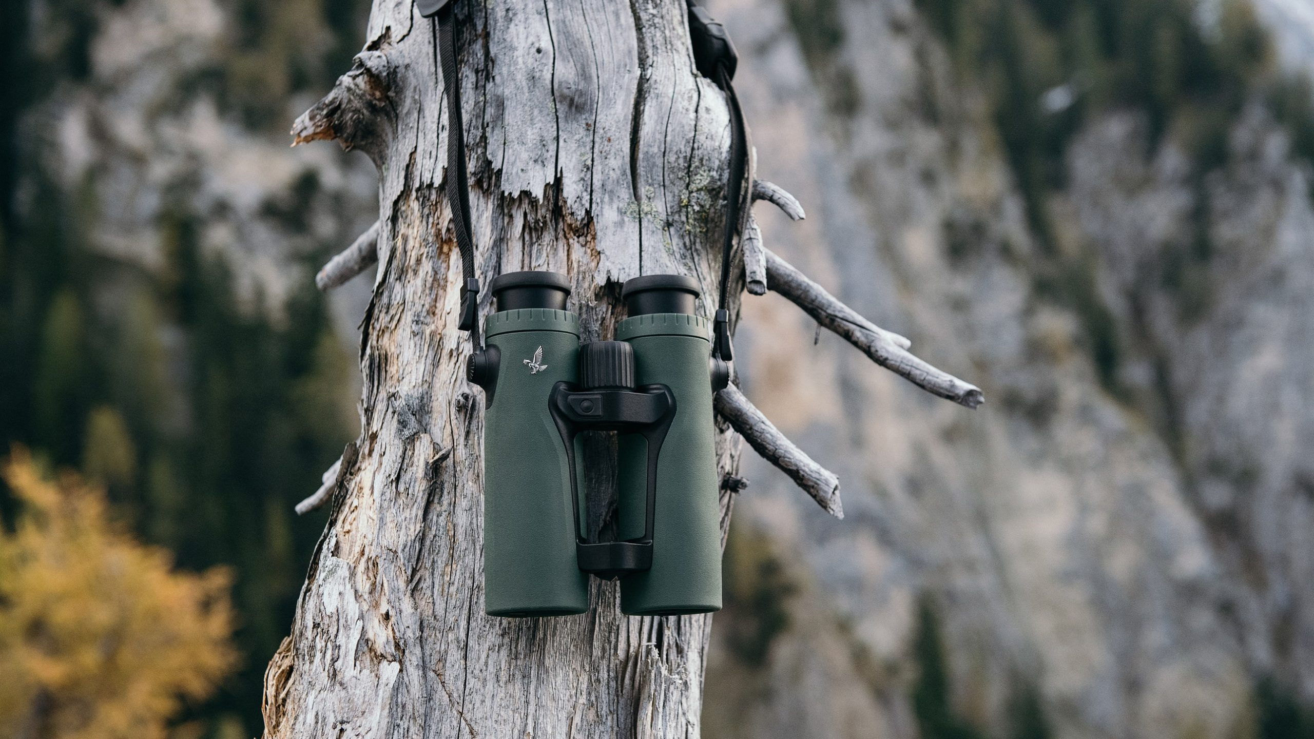 The Best Binoculars for Birding, Stargazing, and Safaris