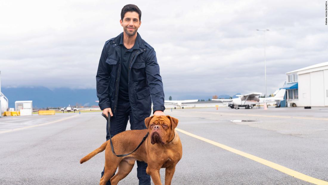 'Turner & Hooch' review: Disney+ goes to the dogs with a pointless revival starring Josh Peck